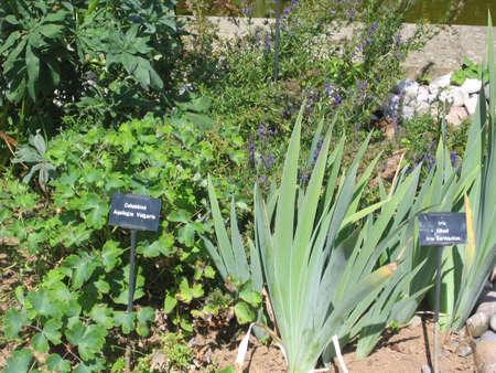 Varias plantas venenosas  Foto de archivo - 358471