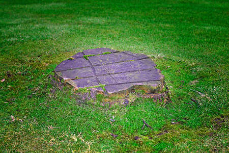 Tree Stump on a Grass Lawn Stock Photo - 2215529