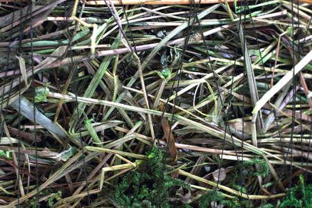 ruminate: Straw texture background