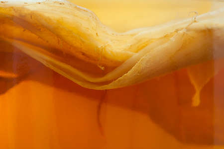 Kombucha fungus close up texture. Natural organic fermented tea drink pro biotic superfood in vintage glass jar. Fitness nutrition sport drink. Natural light.