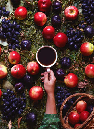 coffee harvest: Concept harvest in September. Autumn composition with coffee, apples, plums, grapes. Coffee and seasons. Cozy mood, comfort, fall weather Stock Photo