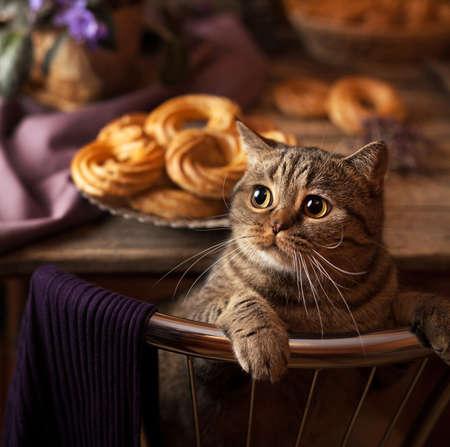 Leuke kat die camera bekijkt. Ras Britse makreel met gele ogen en een borstelige snor. Detailopname. Pussycat, kitty, huisdierenportret. De jonge Britse kat. Vierkant formaat frame Stockfoto