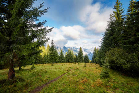 Beautiful fir tree forrest with path scenic view, autumn rural landscape.