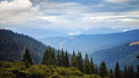 Spruce forrest in mountains panorama, day with beautiful clouds scene Archivio Fotografico