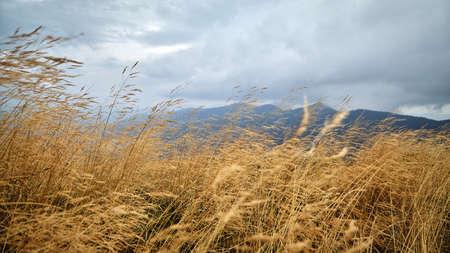Beautiful meadow with yellow grass hills scenic view, autumn rural landscape. Archivio Fotografico
