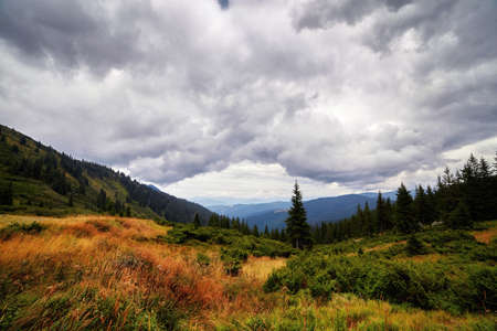 Panorama of mountains and spruce forrest, day with beautiful clouds and fir trees scene