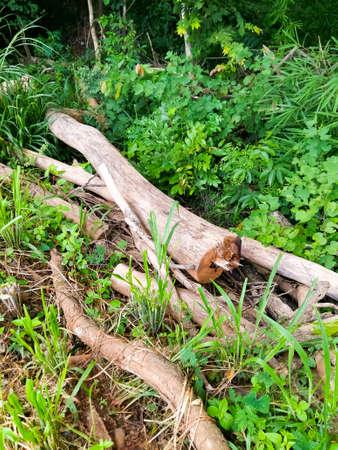 logging: Logging deforestation environmental problem