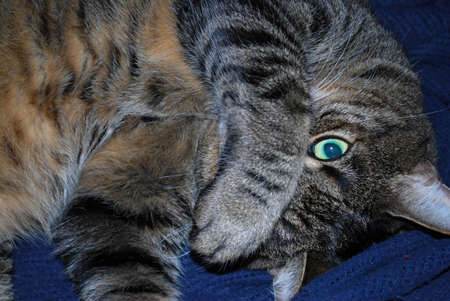 seek: Cat Eyes Hide and Seek Stock Photo