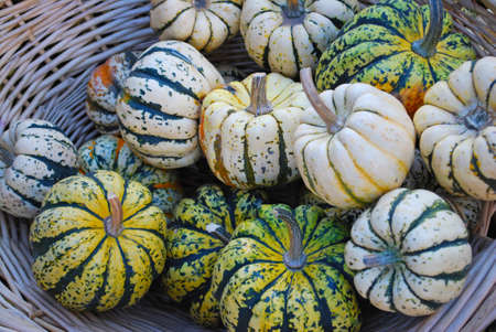organics: Baby Pumpkins and Summer Squash