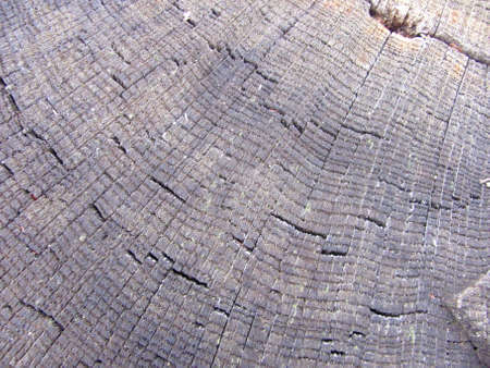 macro wood stump texture photo Фото со стока