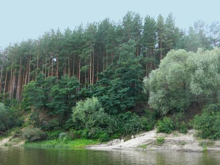 pine-tree forest and a little sandy beach on the riverside Foto de archivo