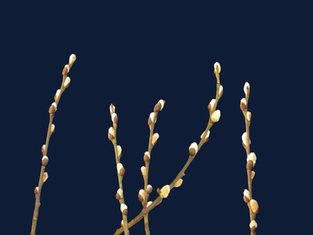 Pussy willow branches on dark background closeup