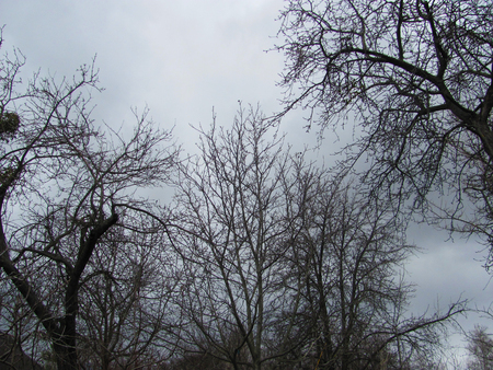 Bare tree branches on a gray clouds background