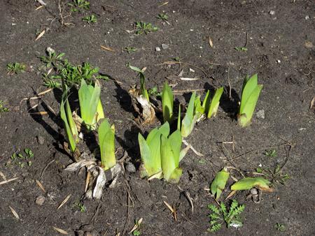 green fresh spring grass on the gray soil