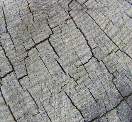 old weathered gray wood texture