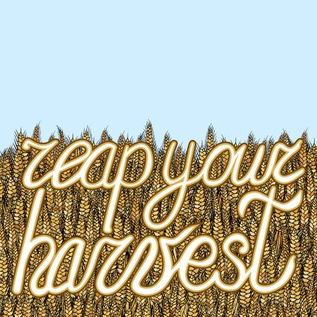 abstract vector cartoon doodle wheat background with lettering reap your harvest