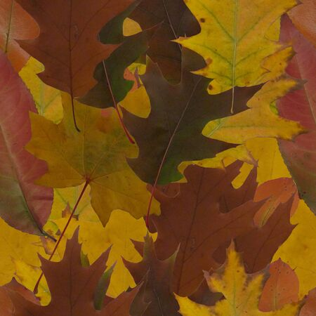 abstract autumn leaves seamless pattern Stock Photo