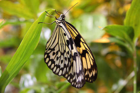 tropical butterfly photo