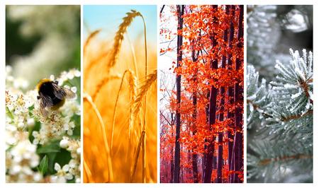 Čtyři roční období: jaro, léto, podzim a zima