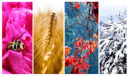 Four seasons: Spring, summer, autumn and winter photo