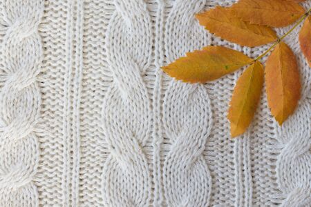 White knitted carpet closeup with autumn leaf. Textile texture off white background. Detailed warm yarn background. Knit cashmere beige wool. Natural woolen fabric, sweater fragment.