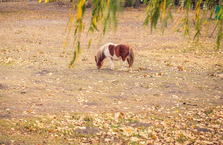 young pony horse on a farm outdoors - pet animal