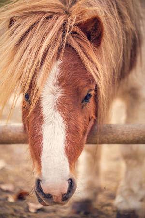 Pony horse- beautiful young pony horse on a farm outdoors - pet animal Stockfoto