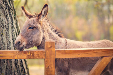 beautiful brown young donkey outdoors in farm