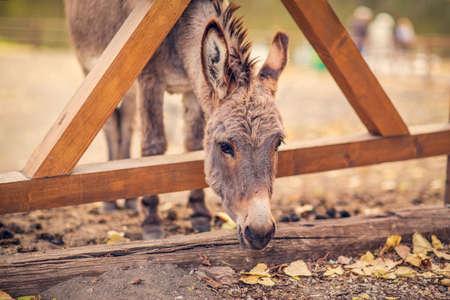 Friendly brown donkey outdoors in farm