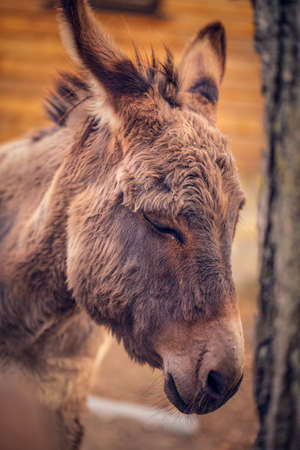 brown donkey domesticated member of the horse family