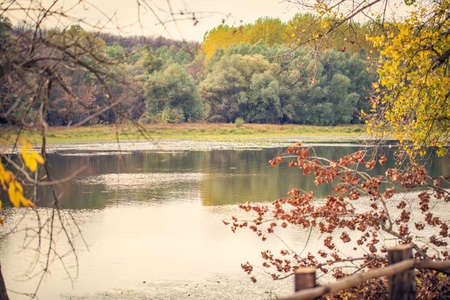 Forest lake - river on a nature sunny summer day background