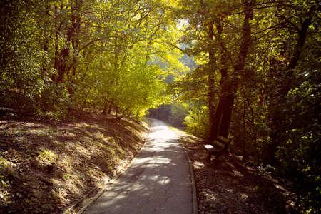 National Forest Park, Natural summer landscape background