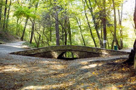 Background Natural National Forest Park, bridge in forest Standard-Bild