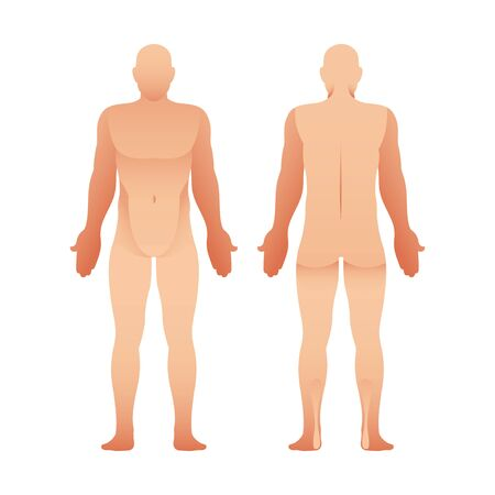 Silhouettes of man front and back view. Vector human body