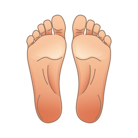 Vector illustration of female or male feet, toes and soles. For your design