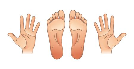 Human body parts. Male and female hands and feet