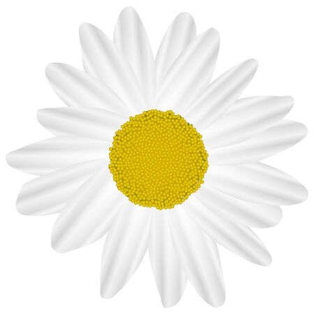 marguerite: Illustration Vector Graphic Flower Marguerite for the creative use in graphic design Illustration