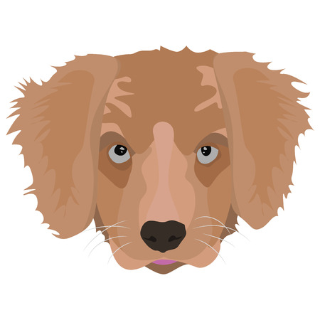 golden retriever puppy: Illustration Golden Retriever Puppy for creative use in graphic design Illustration