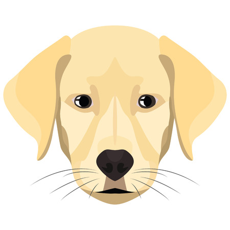 Golden Retriever for the creative use in graphic design Illustration