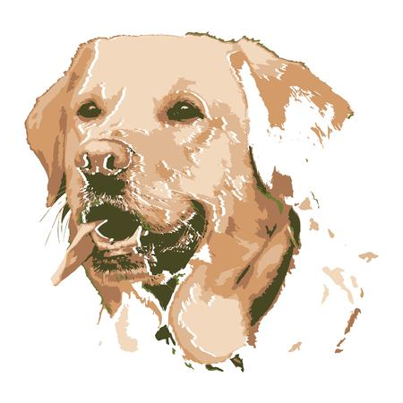 Creative drawing golden retriever. Art inspires people. This drawing of a dog is a great design for the graphic design. Artistically inspired the illustration. 向量圖像