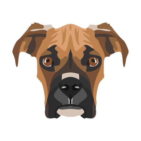 Illustration Boxer | For all Dog owners. What you love about his dog? Puppy dog eyes, wagging tail, smiling, barking. The boxer is a mans best friend. Illustration