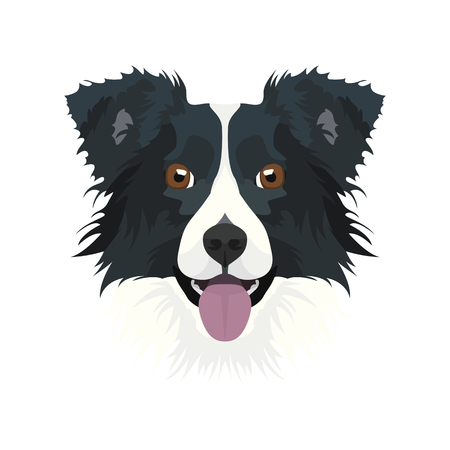 Illustration Border Collie | For all Dog owners. What you love about his dog? Puppy dog eyes, wagging tail, smiling, barking. The Border Collie is a man's best friend.