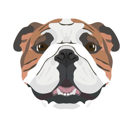 Ilustración Bulldog Inglés   Para todos los dueños de perros. ¿Qué amas de su perro? Ojos de cachorro, meneando la cola, sonriendo, ladrando. El bulldog inglés es el mejor amigo del hombre. Ilustración de vector