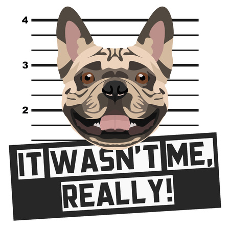 Illustration Mugshot French Bulldog - The guilty dog ​​gets a police photo. Dog lovers and dog fans love them sassy dog.