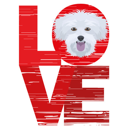 Love Maltese - A dogs head with the word love. The dog is mans best friend and is loved as a pet.