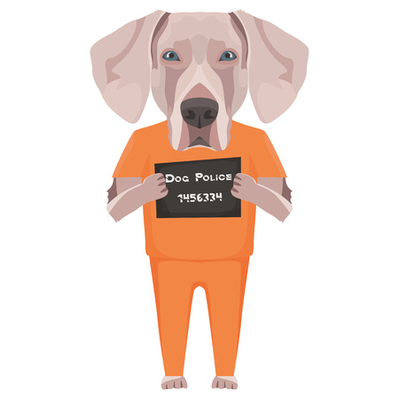 Police photo prison clothing Weimaraner - Mugshot of the guilty dog. The puppy dog ​​eyes can be angry no dog lover.