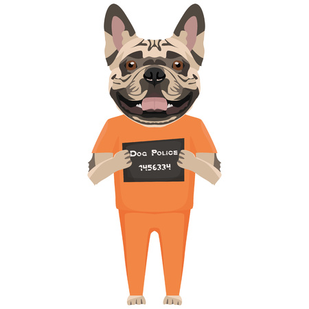 Police photo prison clothes French bulldog - Mugshot of the guilty dog. The puppy dog eyes can be angry no dog lover.