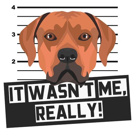 Illustration Mugshot Rhodesian Ridgeback - The guilty dog gets a police photo. Dog lovers and dog fans love them sassy dog. Vektorové ilustrace