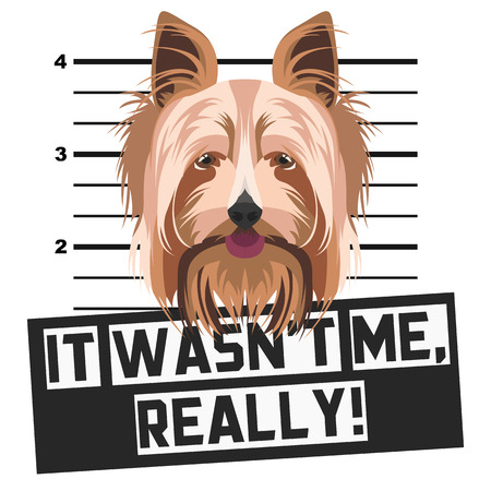 Illustration Mugshot Yorkshire Terrier - The guilty dog ​​gets a police photo. Dog lovers and dog fans love them sassy dog.