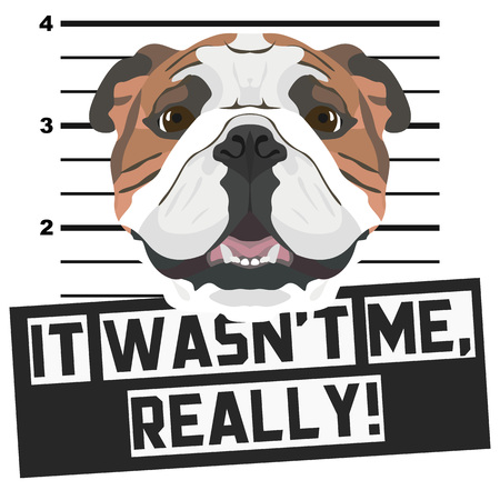 Illustration Mugshot English Bulldog - The guilty dog gets a police photo. Dog lovers and dog fans love them sassy dog.